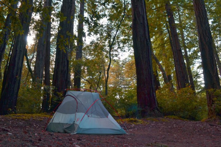 bicycle-touring-redwoods