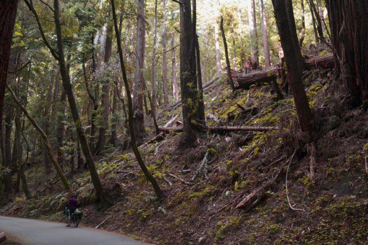 butanoredwoods